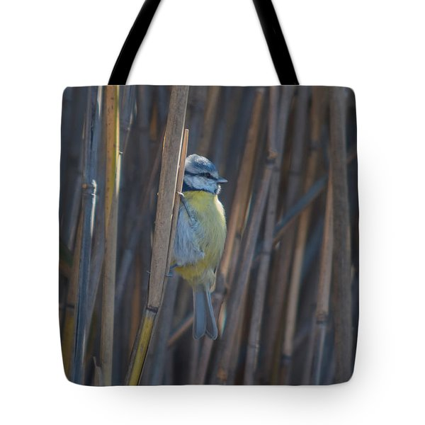Tote Bag featuring the photograph Eurasian Blue Tit - Parus Caeruleus by Jivko Nakev