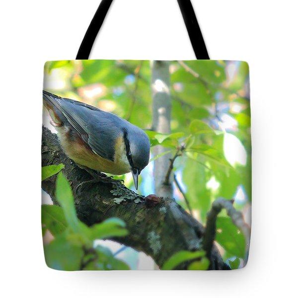 Eurasian Nuthatch - Sitta Europaea Tote Bag