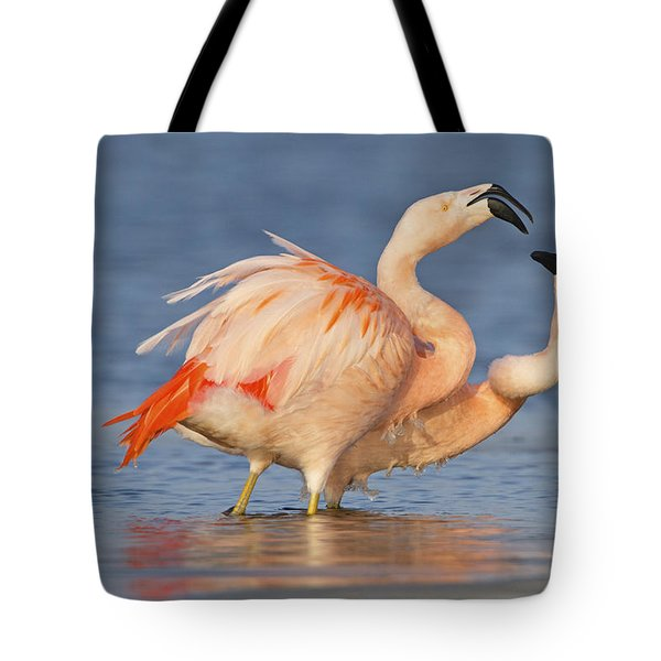 European Flamingo Pair Courting Tote Bag