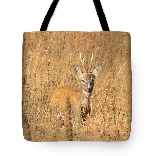 European Roe Deer Tote Bag