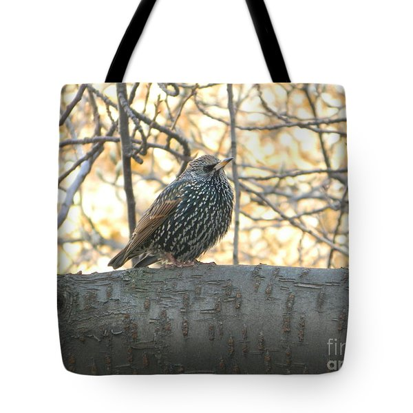 Tote Bag featuring the photograph European Starling by Emmy Marie Vickers