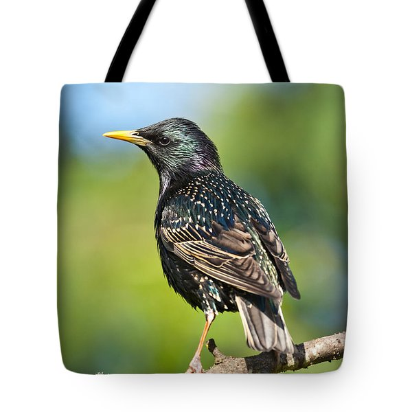 European Starling In A Tree Tote Bag