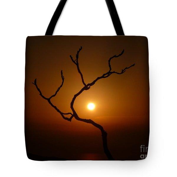 Evening Branch Original Tote Bag