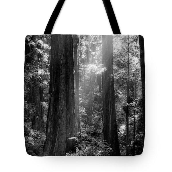 Evening Light Tote Bag by Mark Alder