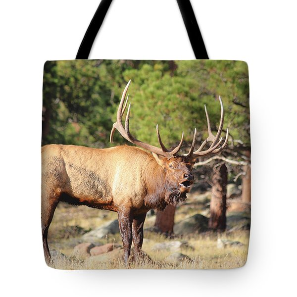 Evening Roundup Tote Bag