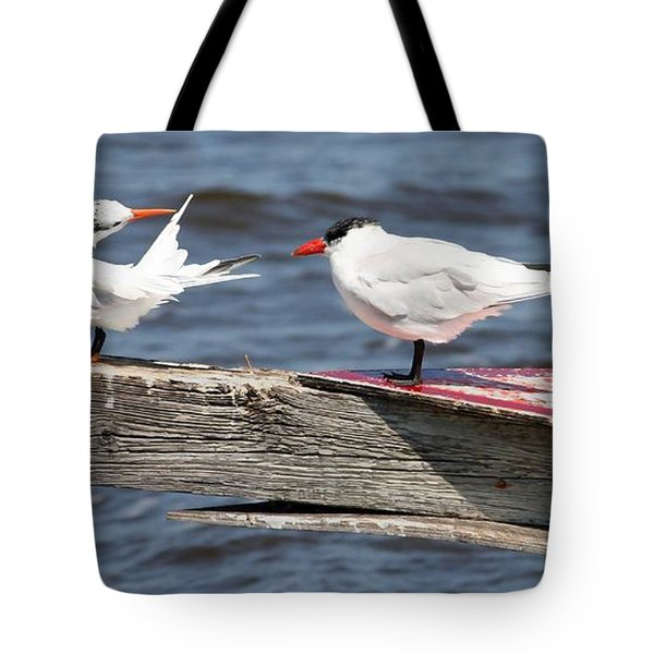Everglades Terns Tote Bag by Kathleen Scanlan