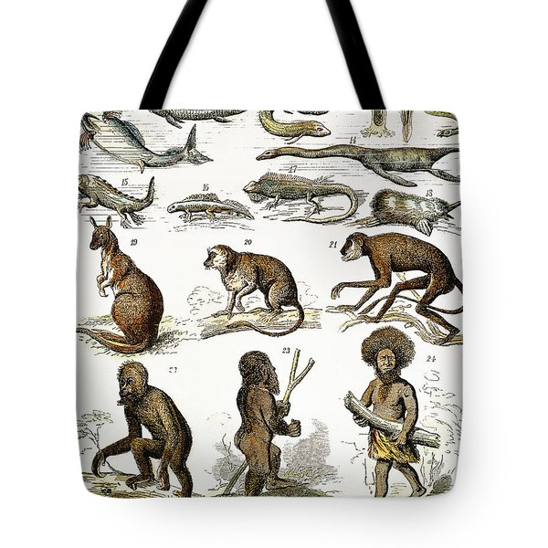 Evolution Chart Tote Bag by Granger