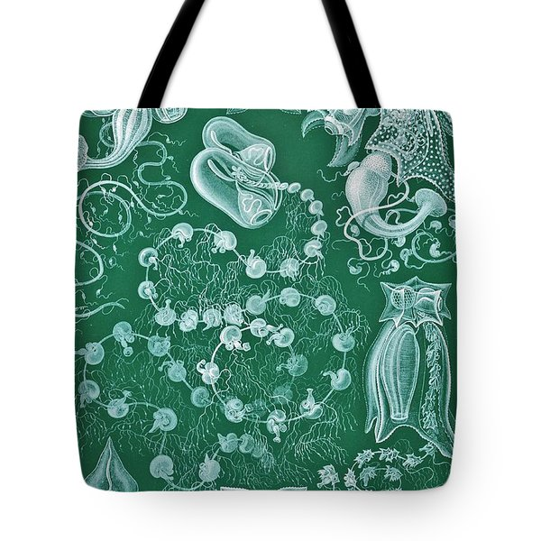 Examples Of Siphonophorae Tote Bag by Ernst Haeckel