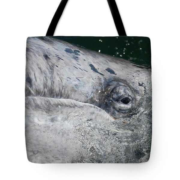 Tote Bag featuring the photograph Eye Of A Young Gray Whale by Don Schwartz