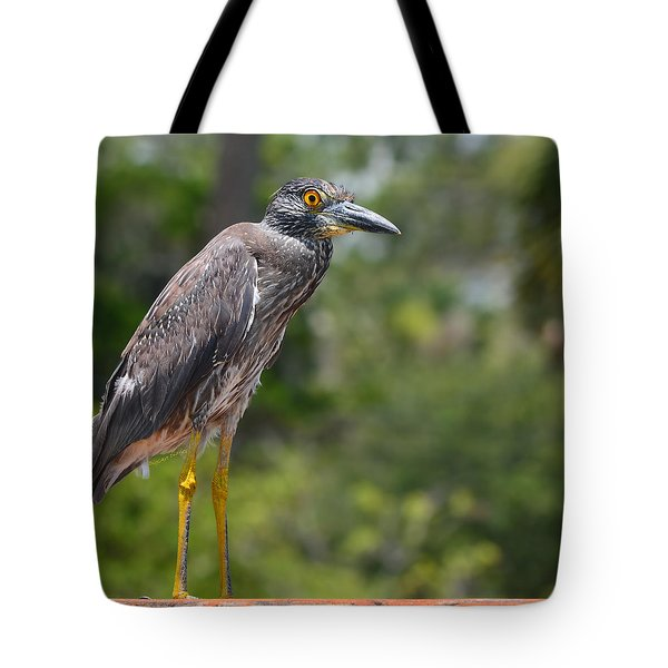 Tote Bag featuring the photograph Eye To Lens by DigiArt Diaries by Vicky B Fuller