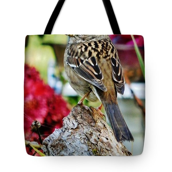 Eyeing The Sparrow Tote Bag