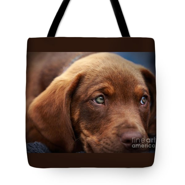 Tote Bag featuring the photograph Eyes Are The Window To The Soul by Mary Lou Chmura