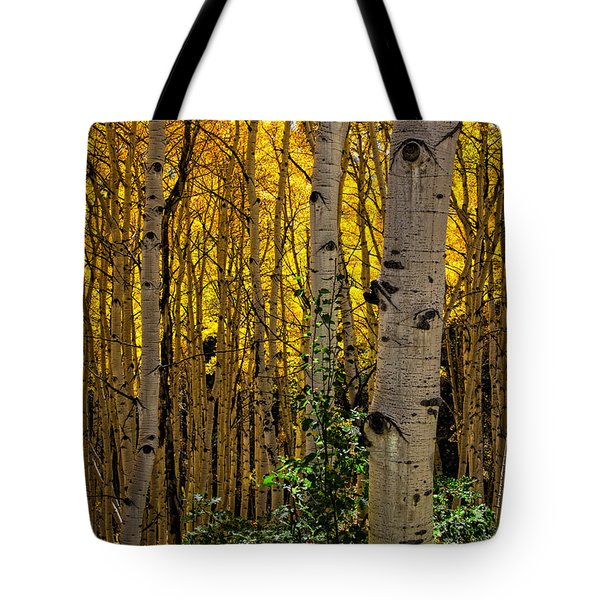 Tote Bag featuring the photograph Eyes Of The Forest by Ken Smith