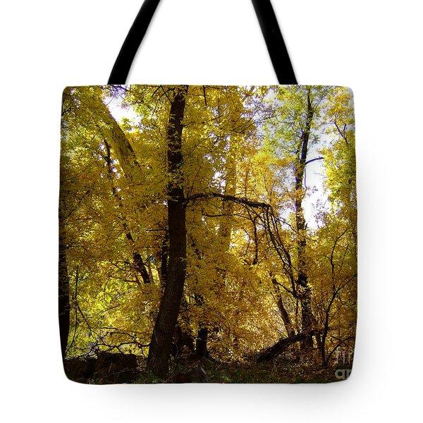 Fall Colors 6169 Tote Bag