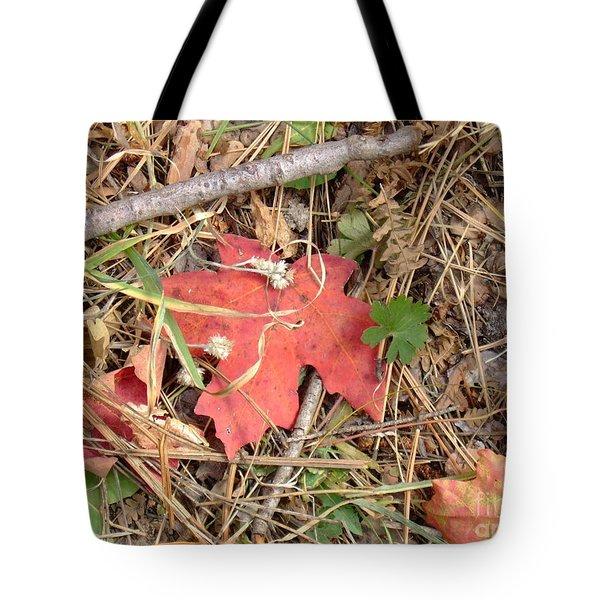 Fall Colors 6307 Tote Bag