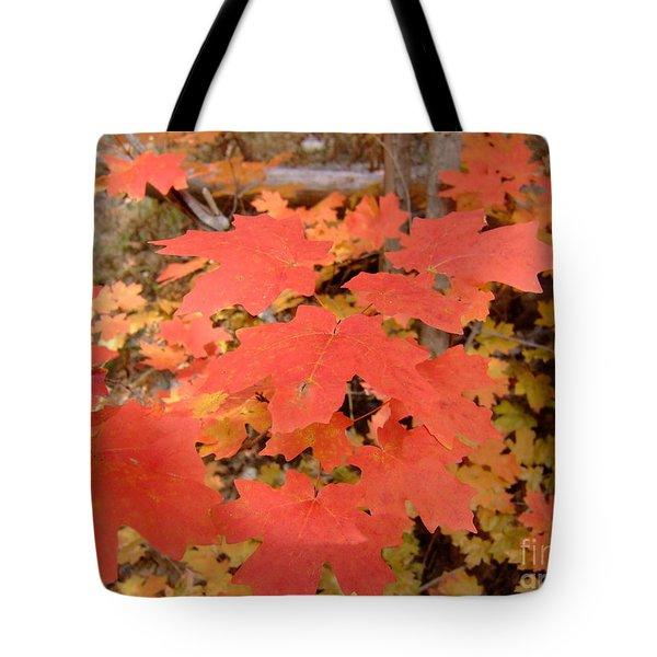 Fall Colors 6308 Tote Bag