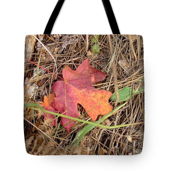 Fall Colors 6312 Tote Bag