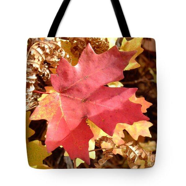 Fall Colors 6313 Tote Bag