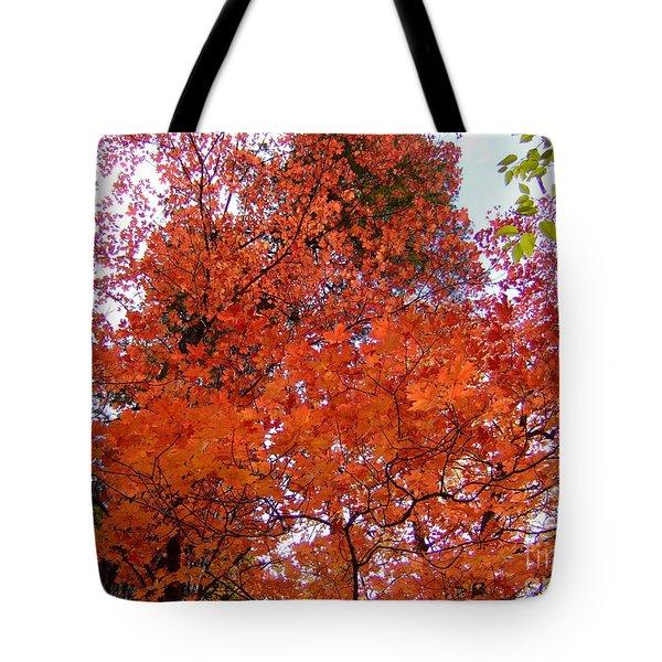 Fall Colors 6359 Tote Bag