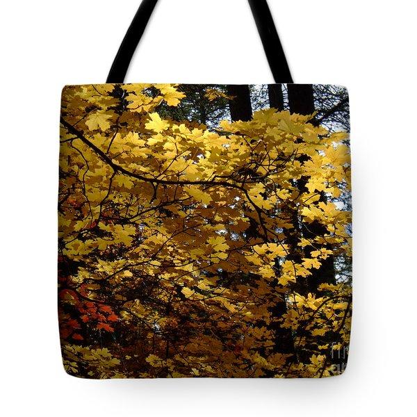 Fall Colors 6372 Tote Bag