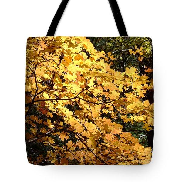 Fall Colors 6407 Tote Bag
