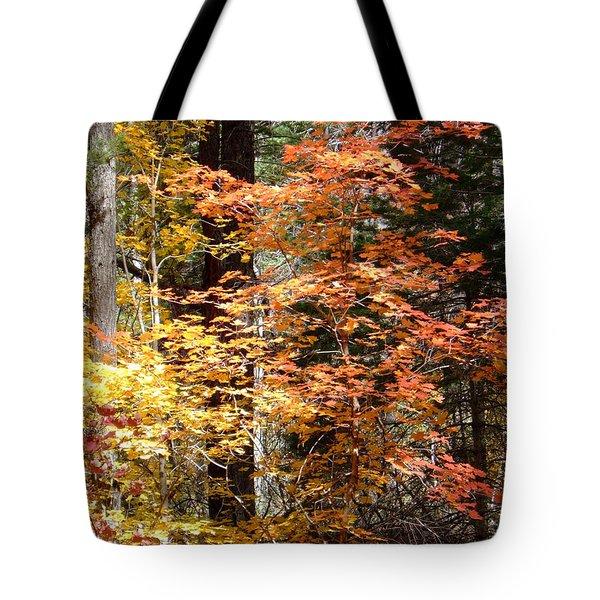 Fall Colors 6412 Tote Bag