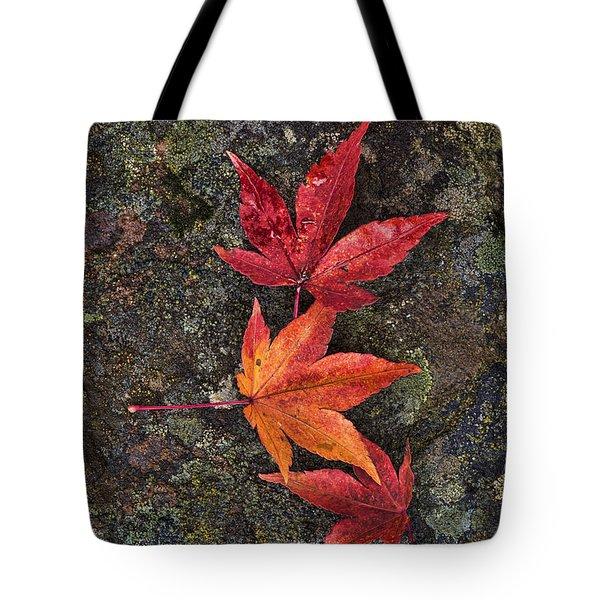 Fall Colors Tote Bag