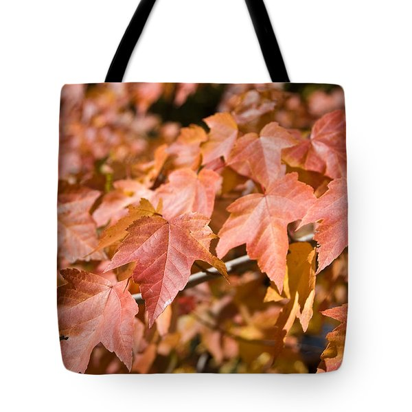 Tote Bag featuring the photograph Fall Colors by Shane Kelly