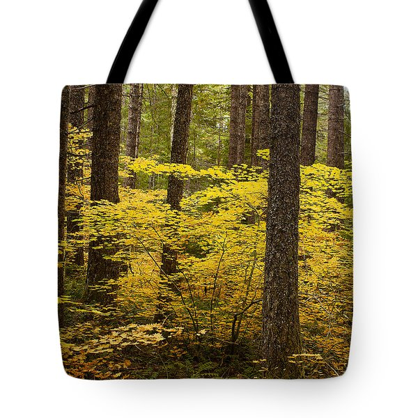 Tote Bag featuring the photograph Fall Foliage by Belinda Greb