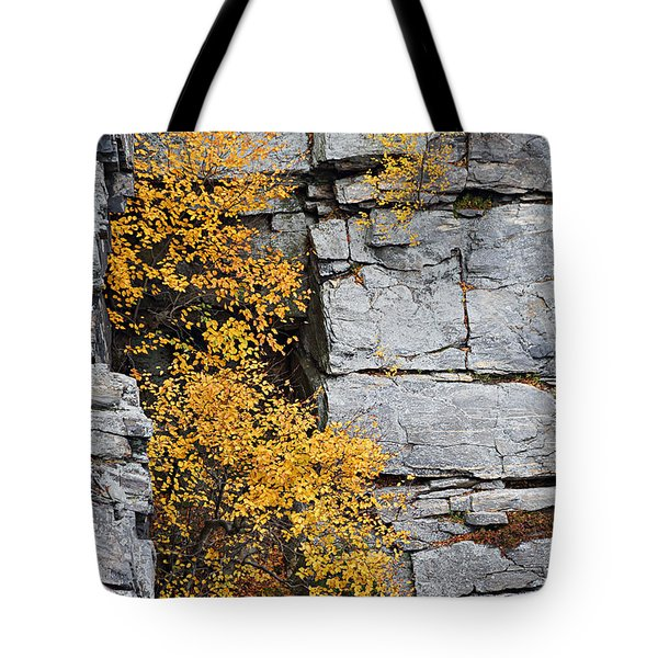 Fall Foliage Colors 01 Tote Bag