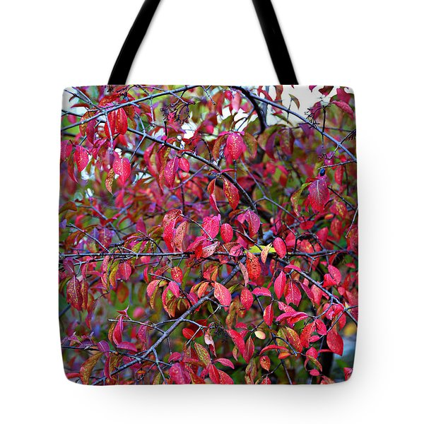 Fall Foliage Colors 05 Tote Bag