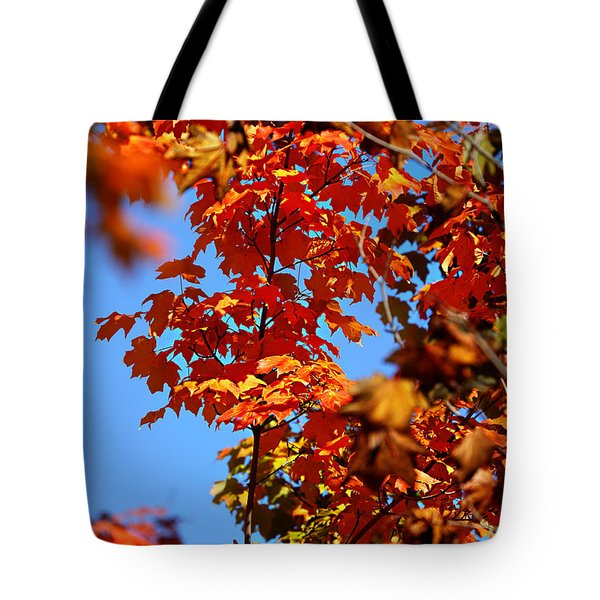 Fall Foliage Colors 15 Tote Bag