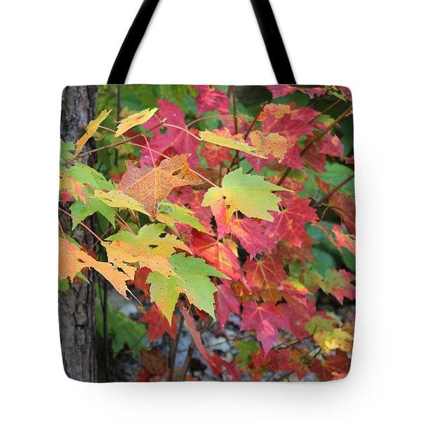 Fall Is Here Tote Bag