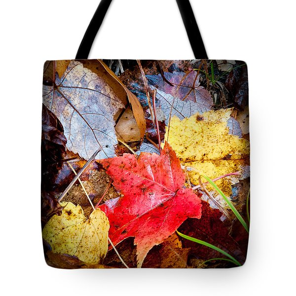 Tote Bag featuring the photograph Fall Leaves In The Rain by David Perry Lawrence