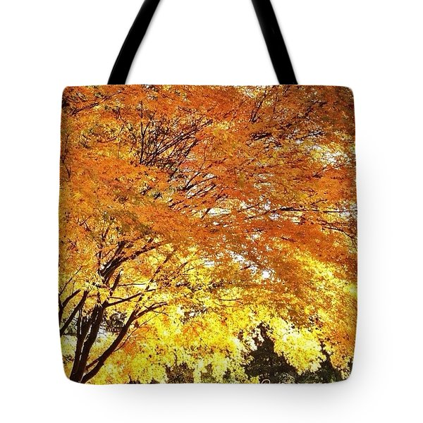 Fall Maple Afternoon Light Tote Bag