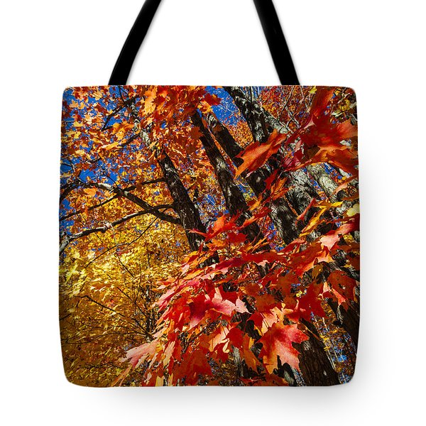Fall Maple Forest Tote Bag by Elena Elisseeva