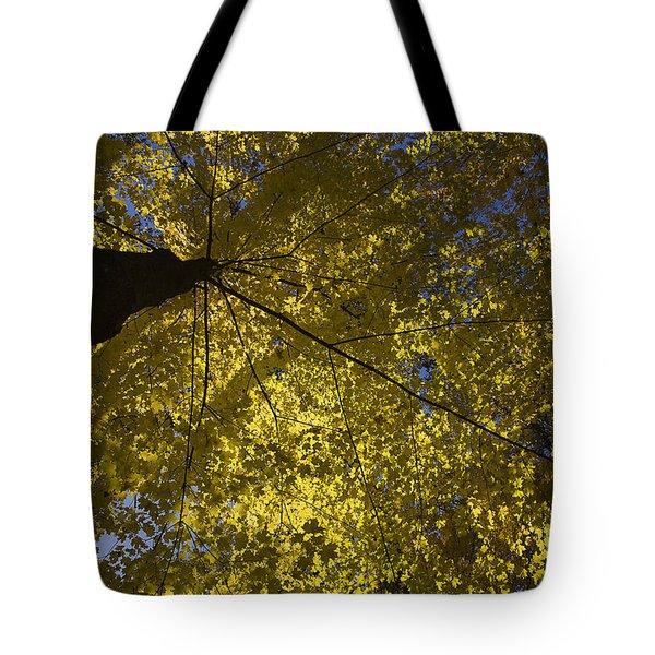Fall Maple Tote Bag by Steven Ralser