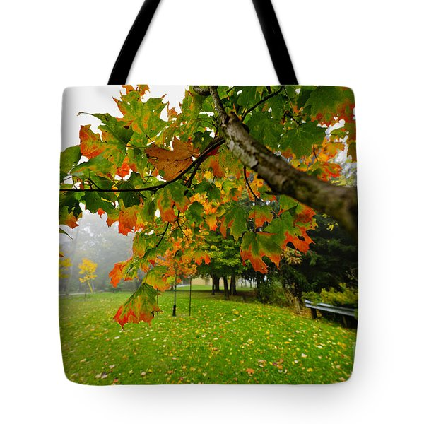 Fall Maple Tree In Foggy Park Tote Bag by Elena Elisseeva