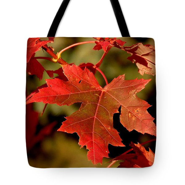Fall Red Beauty Tote Bag