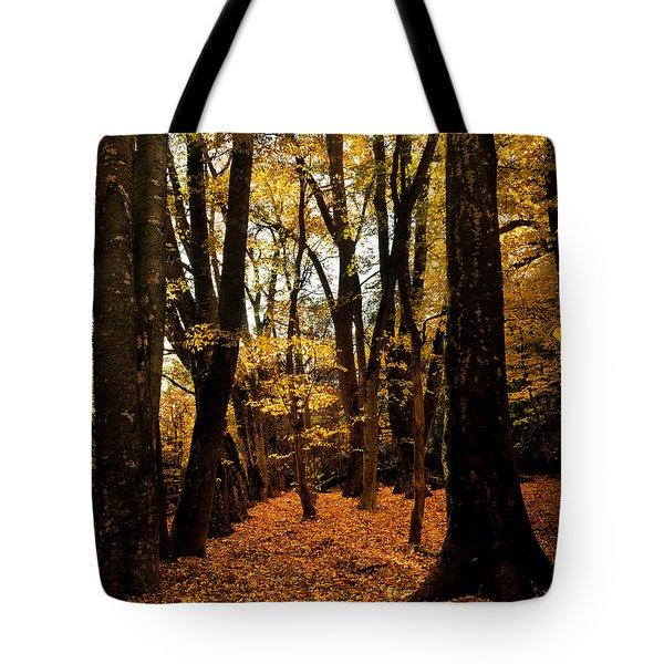 Fall Scene In Bidwell Park Tote Bag