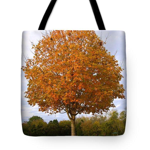 Fall Sugar Maple Tote Bag