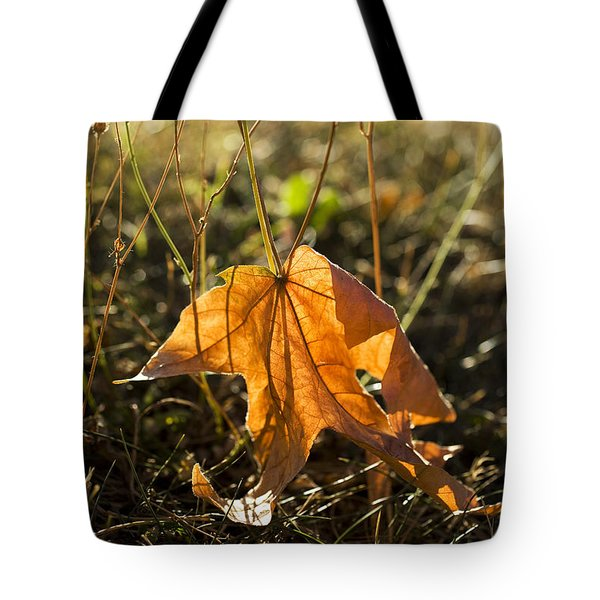 Fallen Maple Leaf Tote Bag