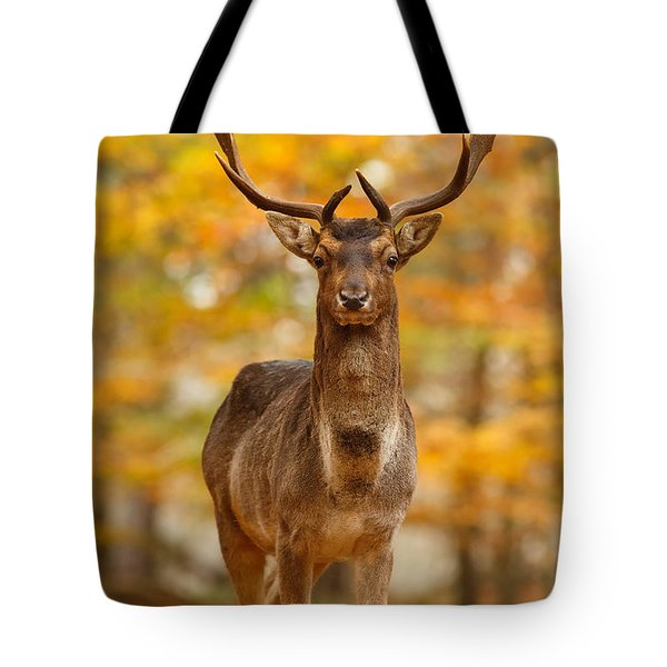 Fallow Deer In Autumn Forest Tote Bag by Roeselien Raimond