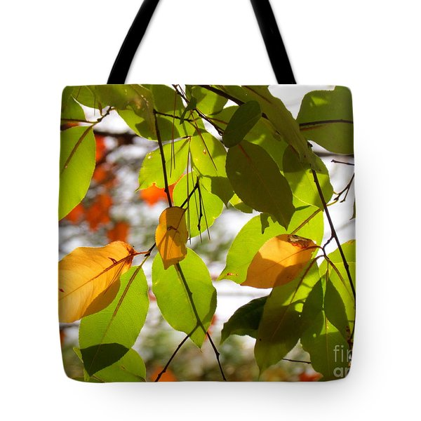 Tote Bag featuring the photograph Famous Fall 10 by France Laliberte