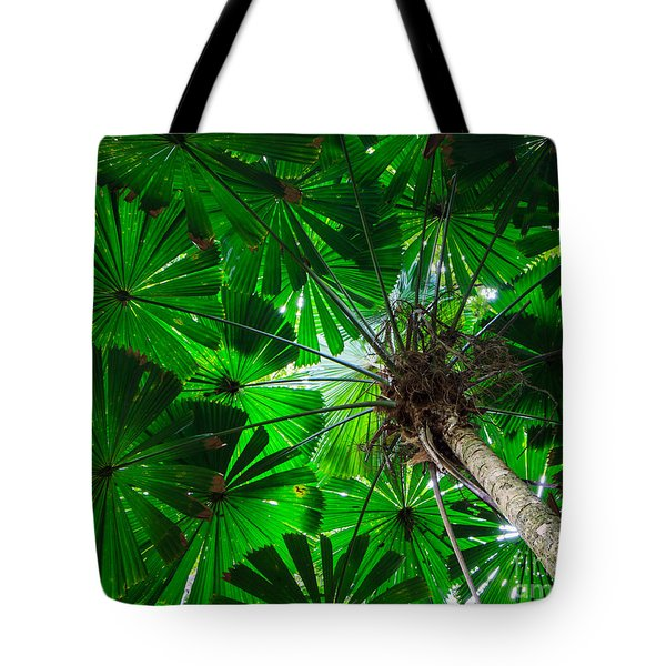 Tote Bag featuring the photograph Fan Palm Tree Of The Rainforest by Peta Thames
