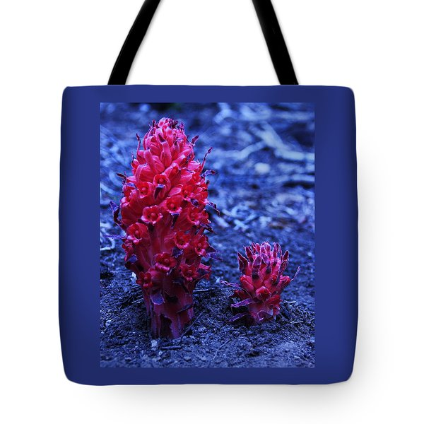 Tote Bag featuring the photograph Father And Son by Sean Sarsfield