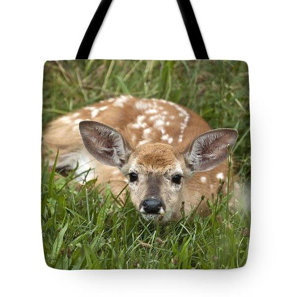 Fawn Tote Bag by Jeannette Hunt