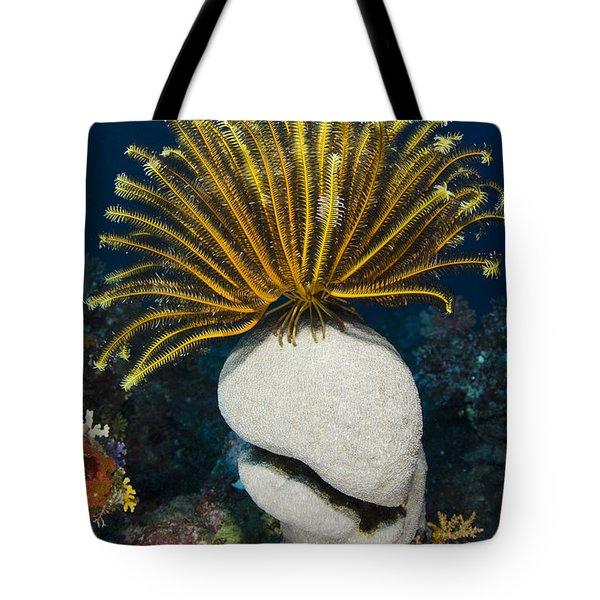Feather Star On Rainbow Reef Fiji Tote Bag