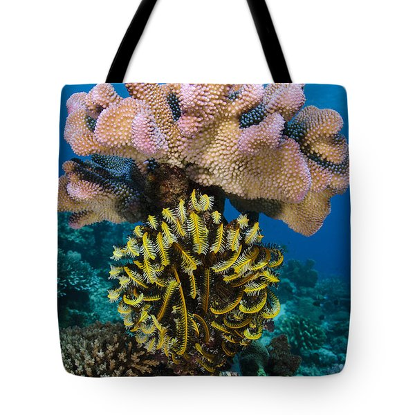 Feather Star Rainbow Reef Fiji Tote Bag