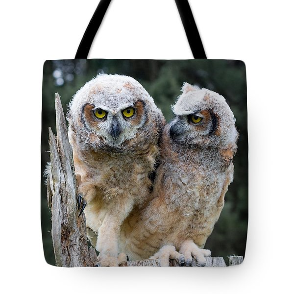 Feeling A Little Grumpy Are We? Tote Bag by Barbara McMahon